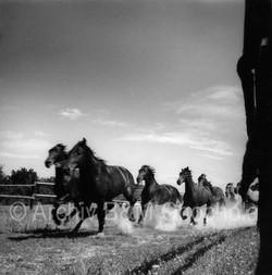 Běžící stádo