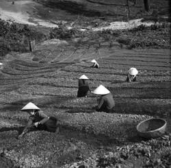Vietnam (34)