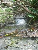 Низинный захломленный ручей в Кхао Но Чуча, типичное местообитание  питты Гюрнея