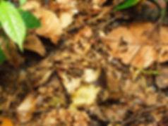 Дорожка муравьев. Кхао Луанг
