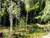 Низинный захломленный ручей, типичное местообитание  питты Гюрнея