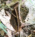 Бабочки Таиланда