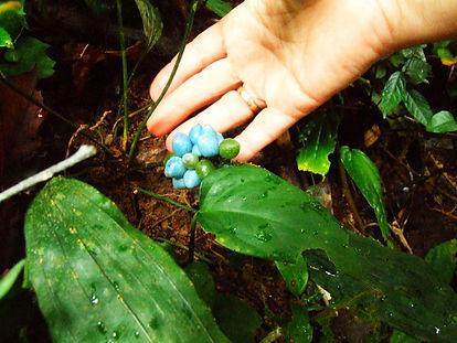 Кхао Луанг . huatiaiasia.com