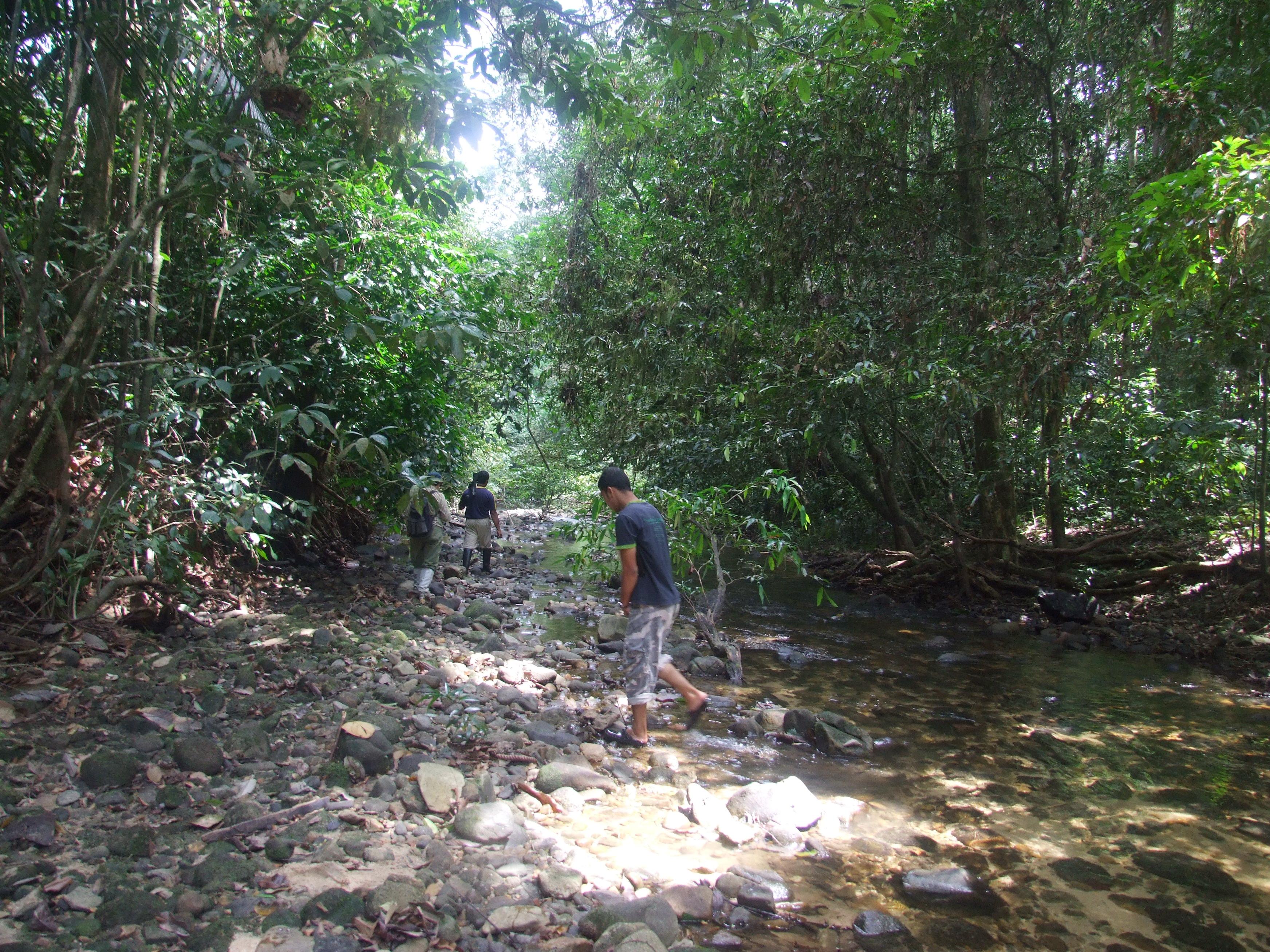 Тропа в джунглях Таиланда