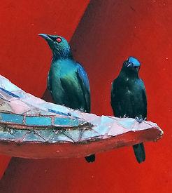 Азиатский блестящий скворец.  Aplonis panayensis. Asian Glossy Starling