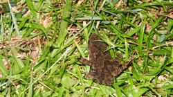 Длинноногая стройная жаба или Жаба-п