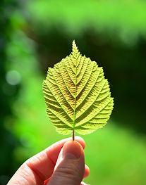 leaf-805656_1920.jpg