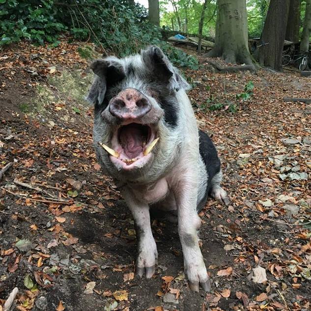 Big Wilbur