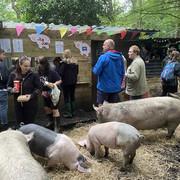 Pig Gig 1.jpg