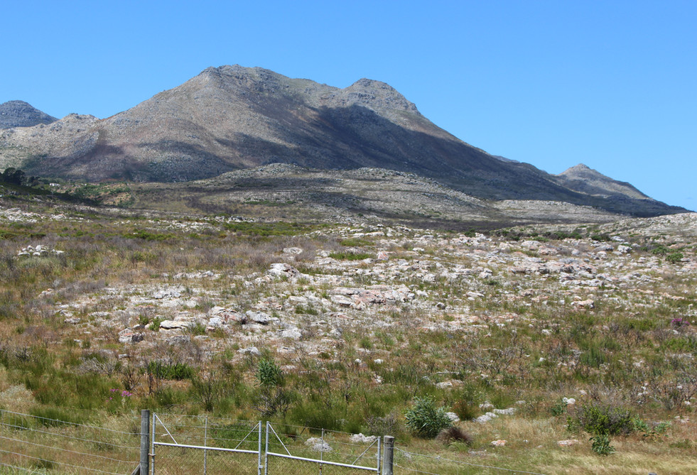 The fence of the Cape Peninsula Nature Reserve and National Park.JPG