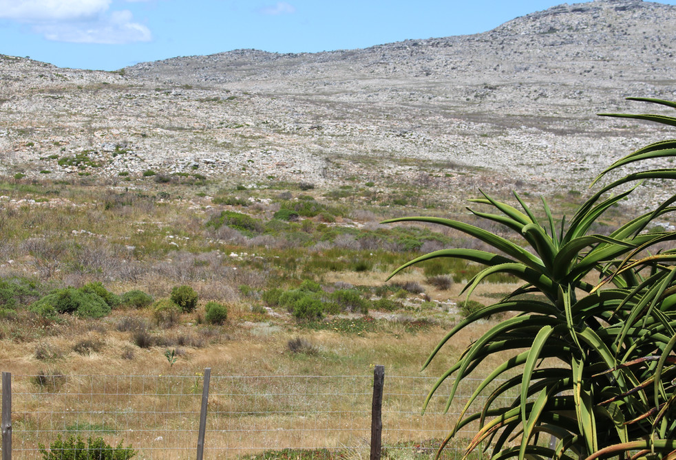 Cape Peninsula Nature Reserve and National Park