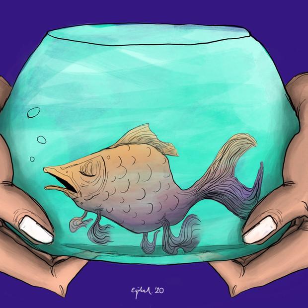 Fısh (balık)