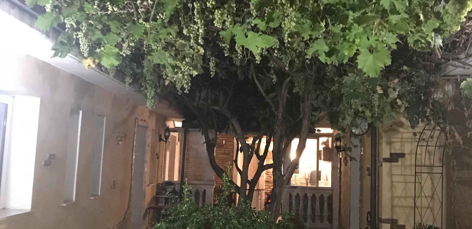 giardino_villa_colli_portuensi.jpg