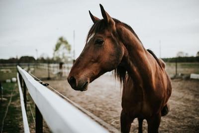 Why Do Horses Help Us Heal?