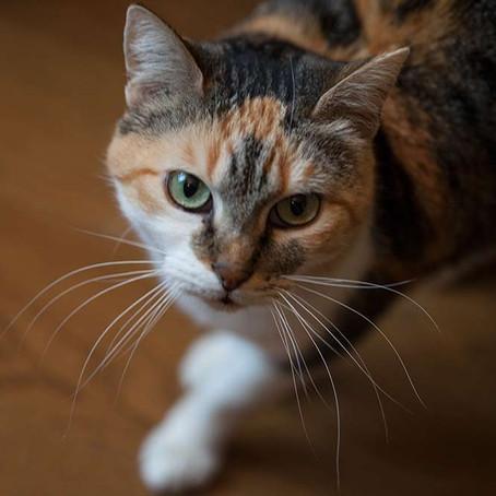 Isabelle, adoptée en octobre 2016 par Sophie et Matthieu.