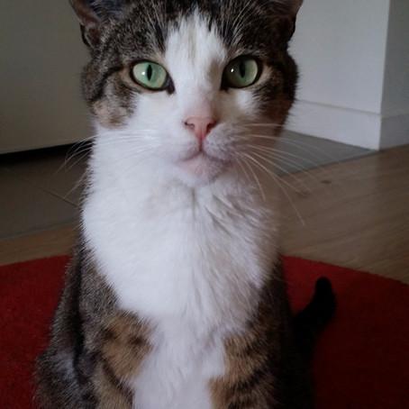 COQUINE, adoptée le 16 mai 2015 par Geneviève.