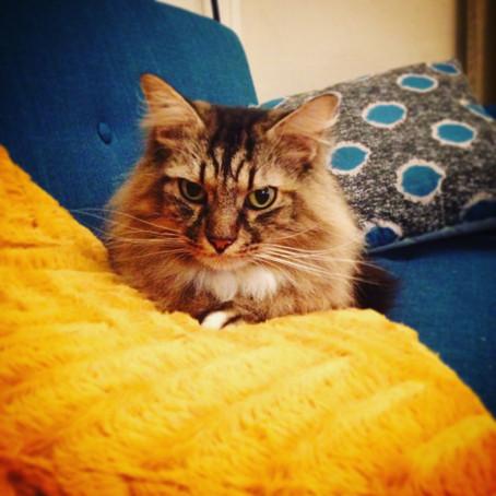Des nouvelles de Pacha, adopté en septembre 2012 par Marilou.