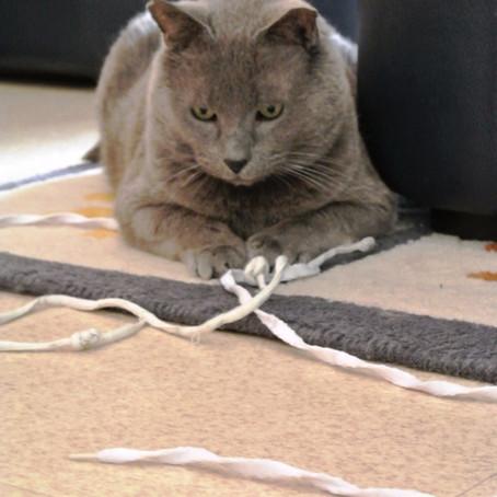 MISTIGRI, adopté le 2 février 2013 par Christine.