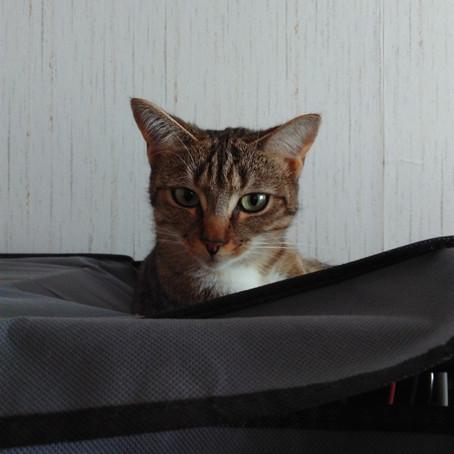 Des nouvelles de Praline, adoptée à l'Ecole du chat de Clichy le 24/09/2016.