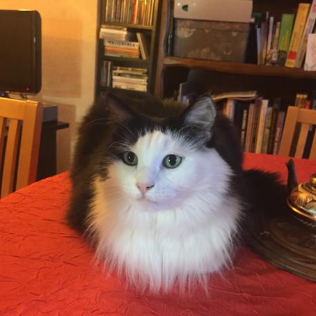 Un bonjour de Vanille adoptée en 2016 par Iréne.