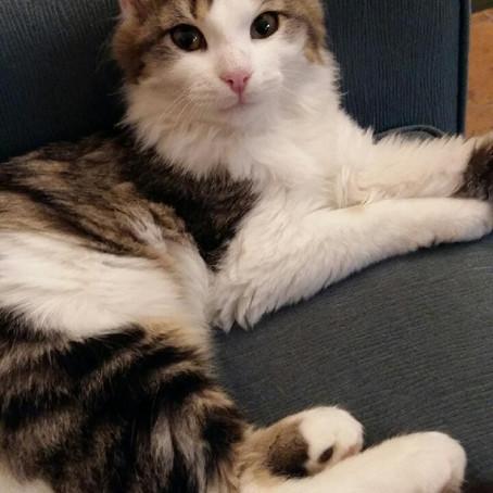 BOUCHON, adopté le 21 octobre 2015 par Sandra