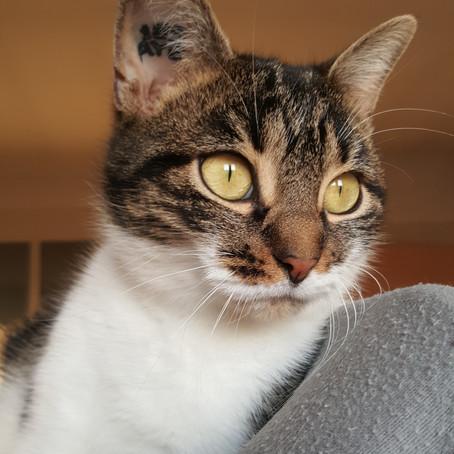 Maeko (ex-Kim), adoptée en octobre 2016.