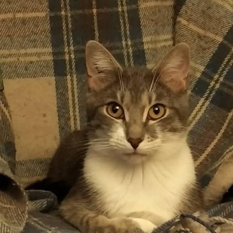 PRINCE, adopté le 12 septembre 2015 par Bernadette.