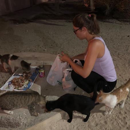 L'Ecole du chat libre fait des émules à l'étranger !