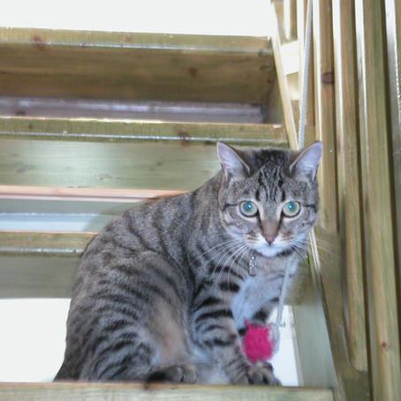 Le magnifique hommage de Cécile à sa petite Moustique qui vient de rejoindre le paradis des chats da
