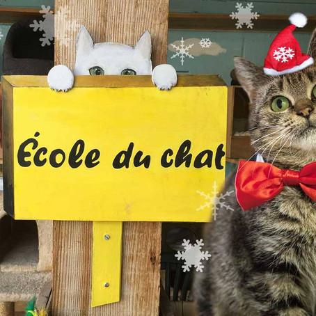 Noël de chats du 16 décembre 2017