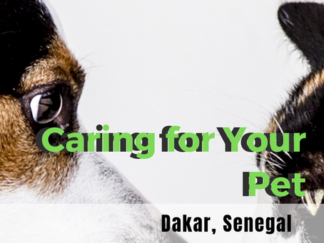 Caring for Your Pet in Senegal