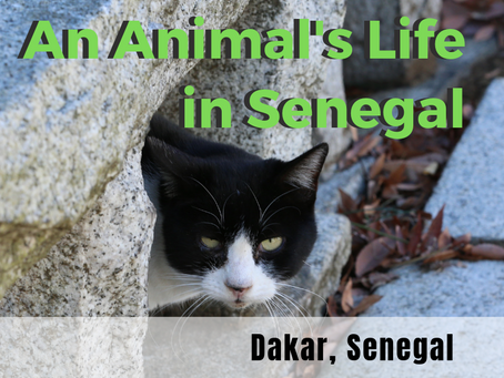 The Lives of Animals in Senegal