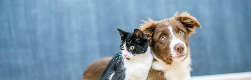 petcare in Dakar, Niofar Executive Relocation, veterinarians in Dakar, veterinaires Dakar, Senegal, cats and dogs, cats, dogs, chat, chien