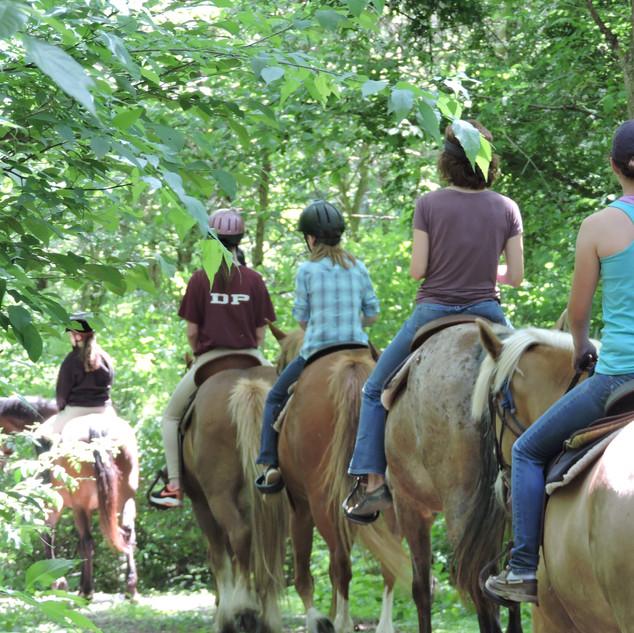 trail ride woods.JPG