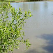 still water pond.JPG