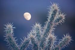 Moon & Cholla