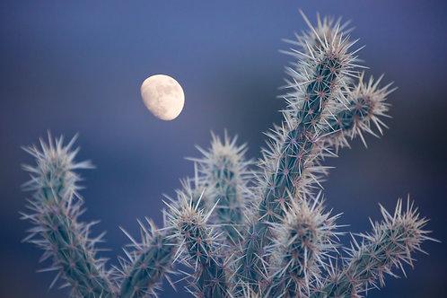 Cholla & Moon