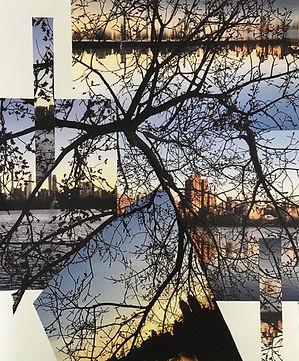 TreesIMG_2060.jpg
