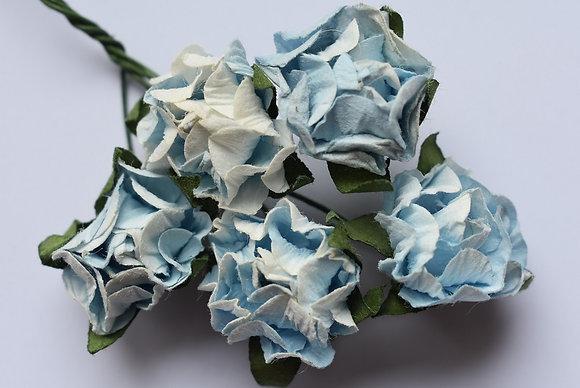Fleurs x5