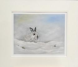 'Isolation' - Mountain hare