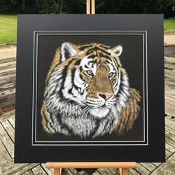 'Amba' Siberian Tiger