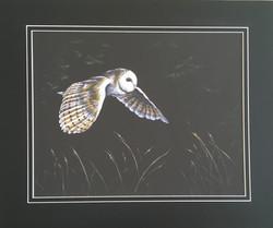 'On Silent Wings' - Barn Owl