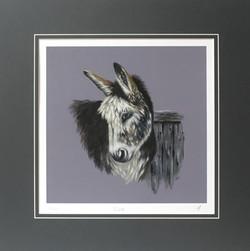 'Glen' - Donkey
