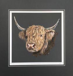 'The Highlander' - Highland Cow