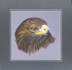 'Drein' - Golden Eagle