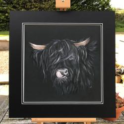 'Black Jack' Highland Cow