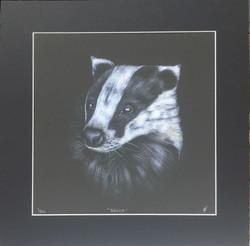 'Brock' - Badger