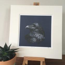 'Rascal' The Raven