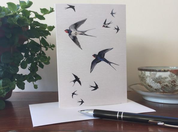 Summer Breeze - Swallows