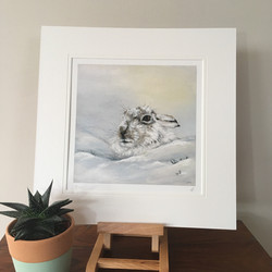 Snowy Mountain Hare